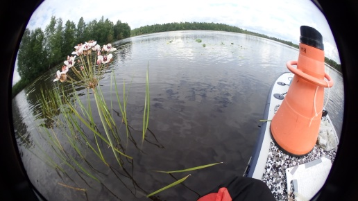 SUP-board and aquascope comes in handy (by Essi Keskinen)