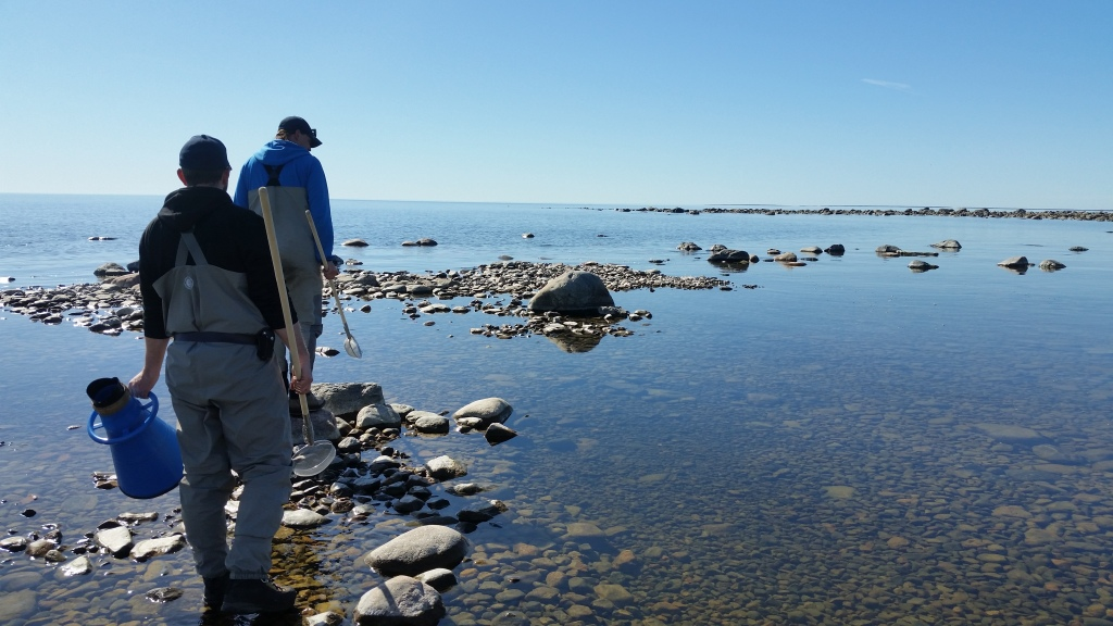 2 people, with small hand nets and water binoculars, walking on a rocky shallow shore line.