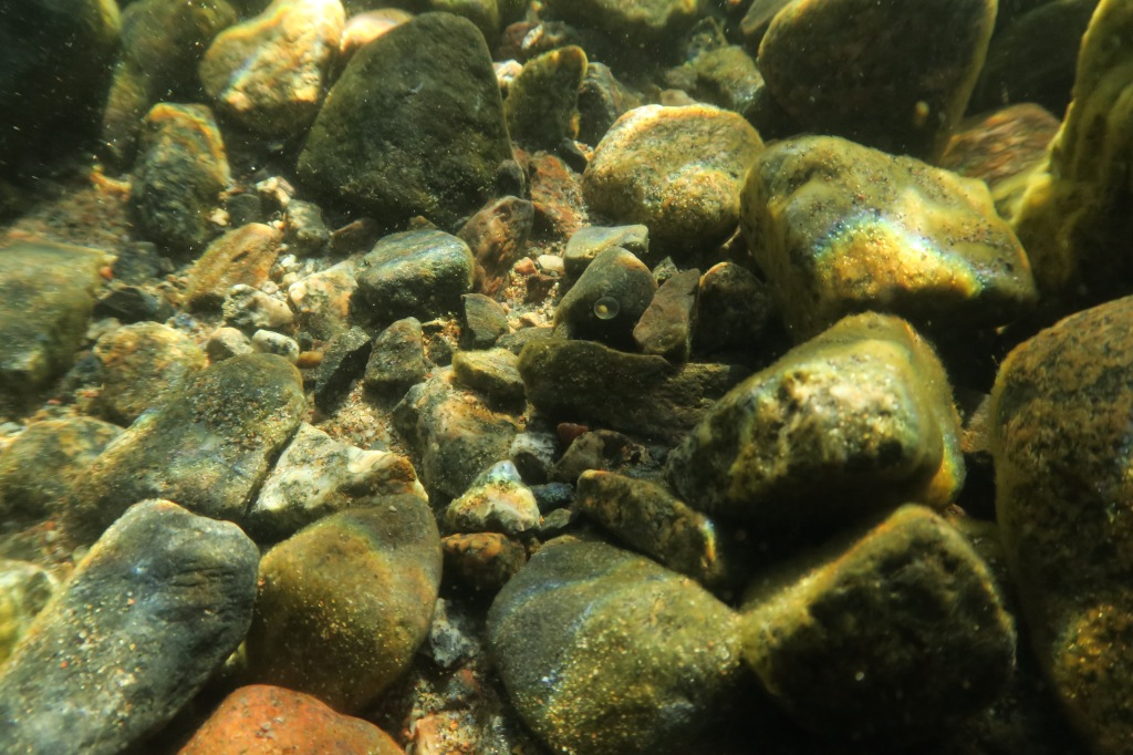 Rocky bottom, one greyling egg to be seen.