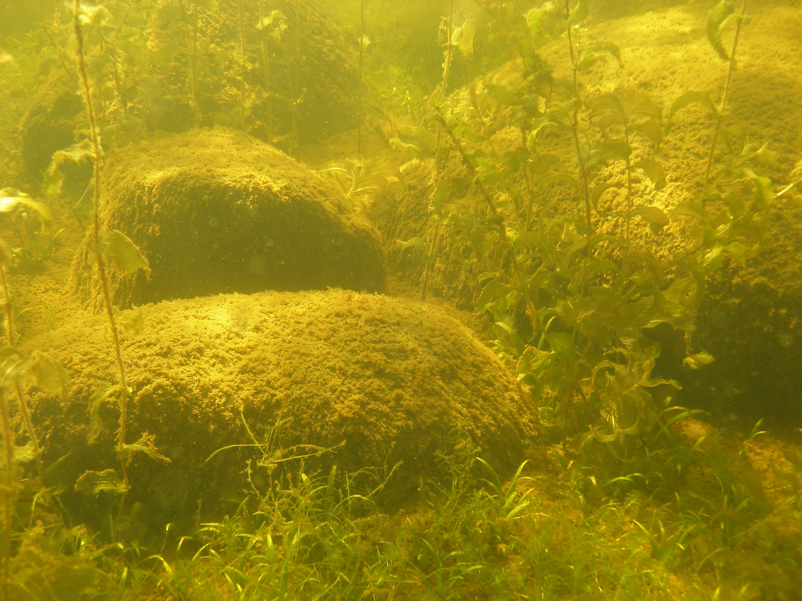 Big rocks and lot of vegetation.