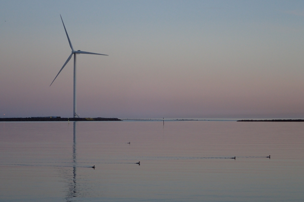 A wind mil in peaceful picture of sunset.  Water birds swimming past.