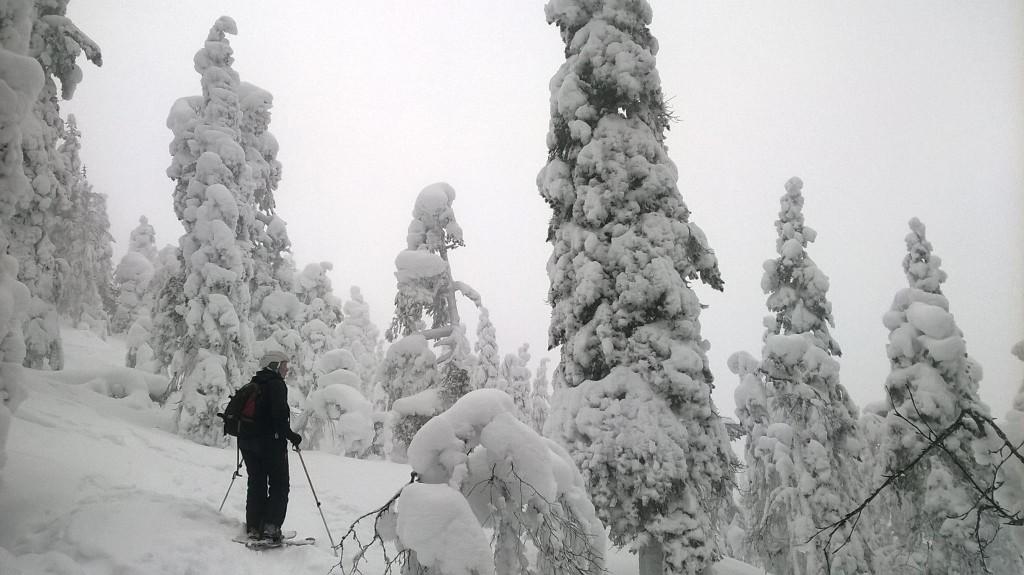 Merja Lipponen on skis in a hill forest.