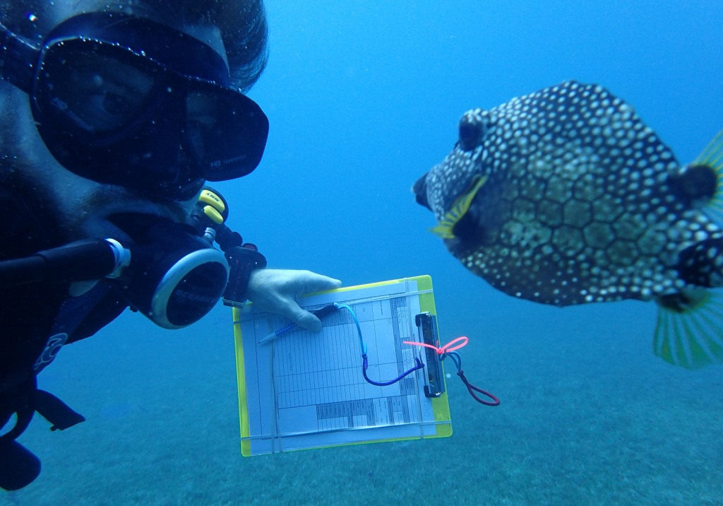 A diver with a note pad and a tropical fish swimming past.