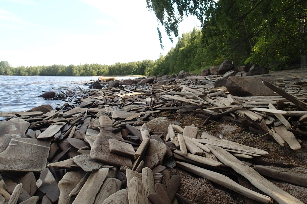 Lots of wood pieces on a shore.