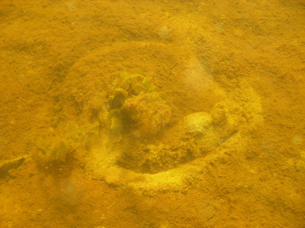 Sandy bottom with a circular trail done by a mussel.