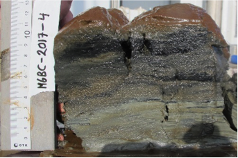 Sample from sea bottom, showing sediment layers.