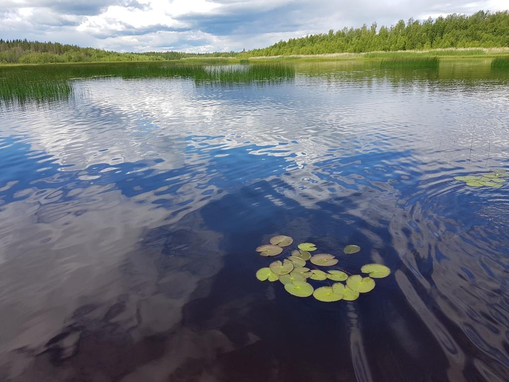 Picture of Töre river estaury